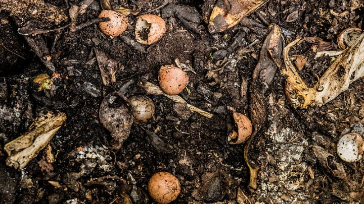 Food-scraps-compost