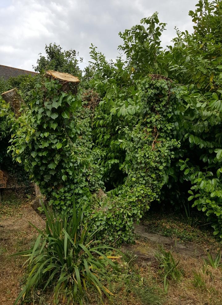 apple tree stump.jpg
